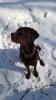 Lucy im Schnee_1
